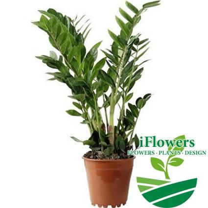 Комнатные цветы купить в киеве онлайнi декупаж записной книжки в подарок мужчине на 23 февраля