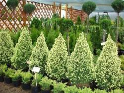 Садовые, уличные растения