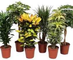 Высокие растения для дома и офиса