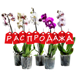 Уцененные растения, цветы