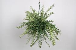 Aeschynanthus 'Caroline'