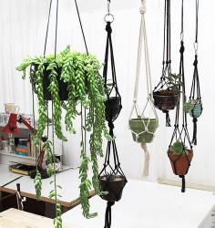 Подвесные растения