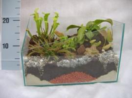 террариум с насекомоядными растениями