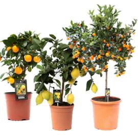 Декоративно-плодовые растения