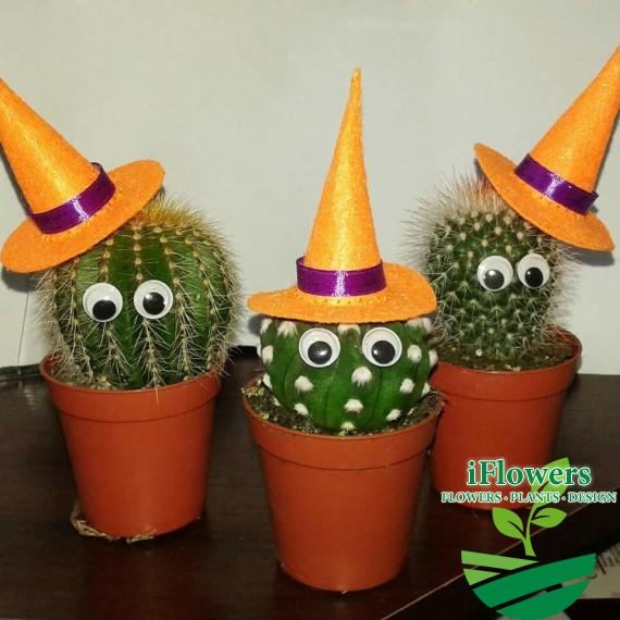 Кактус Halloween3