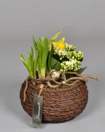 Композиция с комнатными растениями