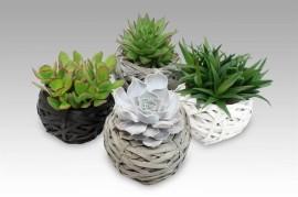 Суккуленты в плетеной вазе