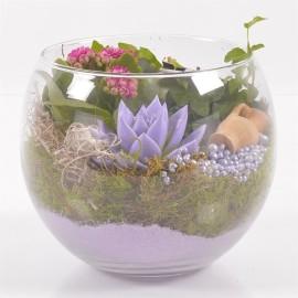 Круглый флорариум Чудо