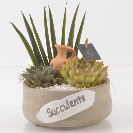 Флорариум суккуленты