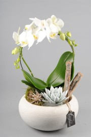 Орхидеи круг