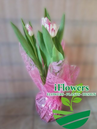 тюльпаны_в горшке