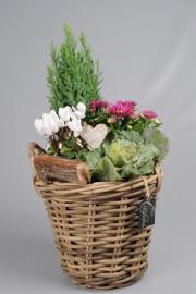 Корзинка с растениями