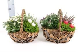 Корзины с комнатными растениями