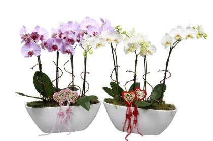 Орхидеи в вазе