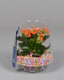 Флорариум с цветными шариками