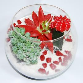 красная эйфория флорариум