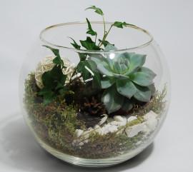 Живой флорариум