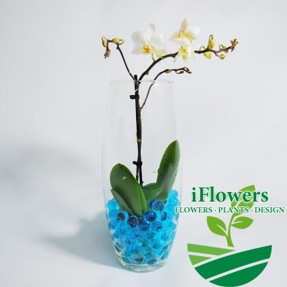 мини орхидея в вазе