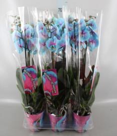 Синяя орхидея Акварель