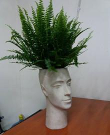 Голова и нефролепис
