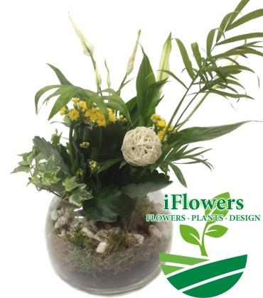 Зеленый флорариум