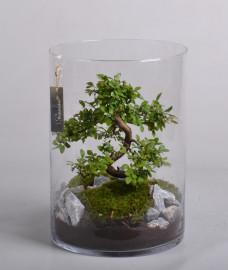 Бонсай-в-стеклянном-флорариуме