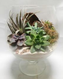 Природный флорариум в большом бокале