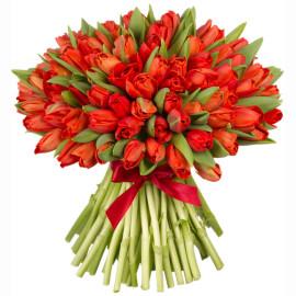 красные тюльпаны 101шт