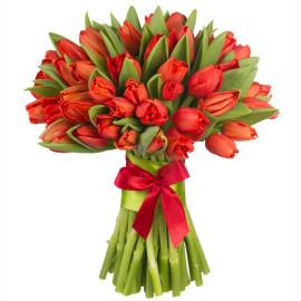 красные тюльпаны 51шт