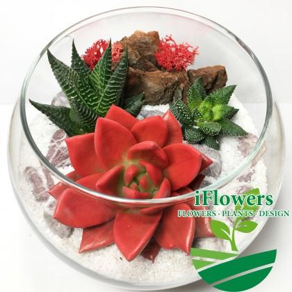 Женственный-флор-с-красной-эхеверией