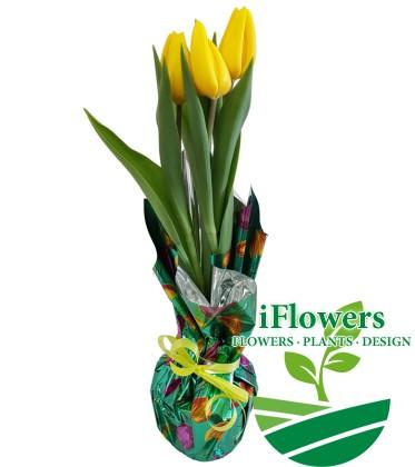 Желтый-тюльпан-в-разноцветной-бумаге