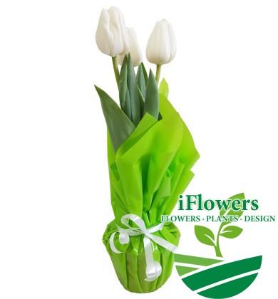 белый-тюльпан-в-салатовой-бумаге
