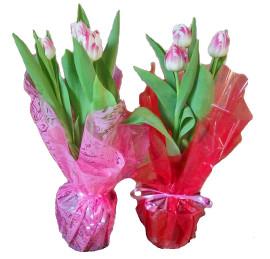 Тюльпаны в 13см