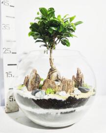 Флорариум-Бонсай